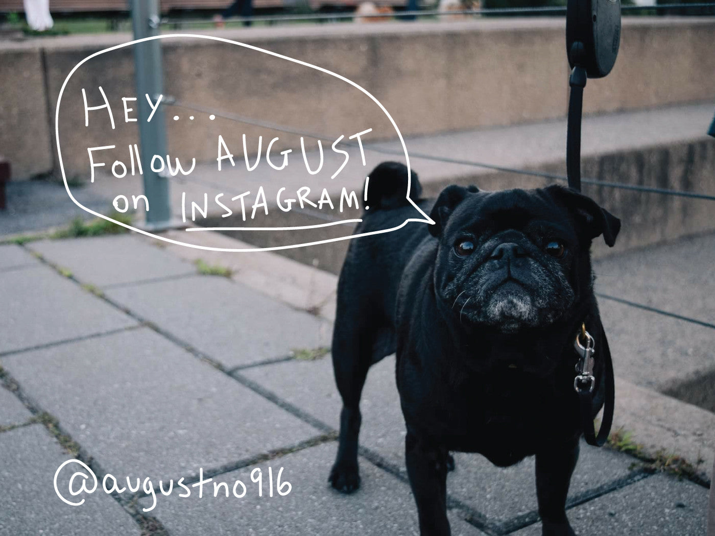 Follow us on instagram - Mimi and August