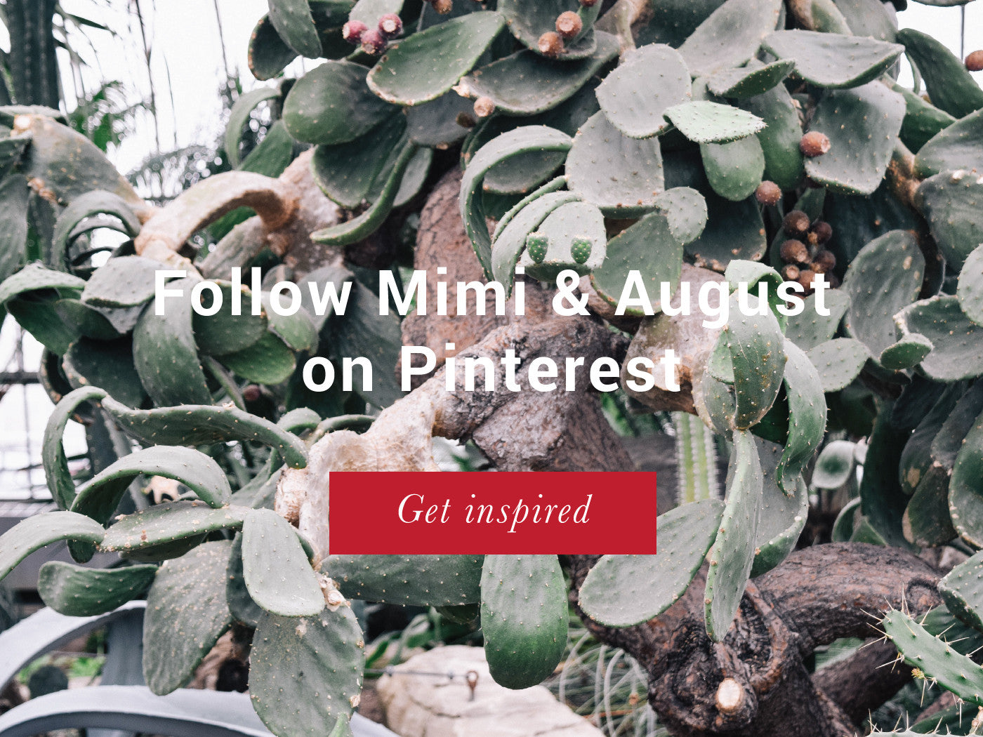 Folow us on Pinterest - Mimi and August