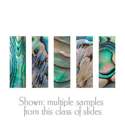MOTHER OF PEARL SLIDES, Paua