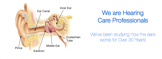 Ear Anatomy | How the Ear Works | Clearly Hearing | Clearly Hearing