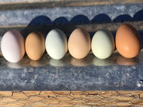 One-Dozen Farm Fresh Eggs