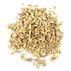 Farro provides fiber, vitamin B3 and zinc, healthier that wheat