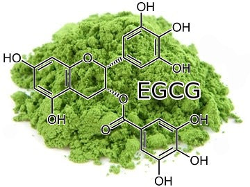 matcha green tea EGCG