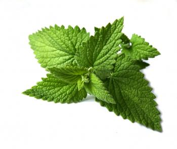 Mints' health benefits including detoxing, cooling body, relieve pains and cold