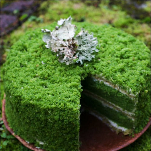 Nettle Moss Cake + Matcha Genoise Recipe with douglas fir - grapefruit buttercream