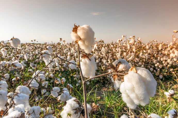 Organic cotton. Does it cost the earth?