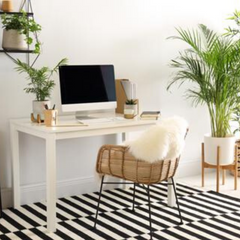 Top 10 Office Plants you won't kill