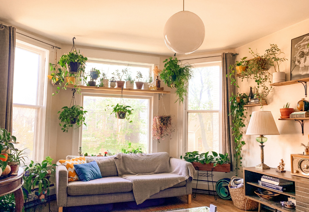 How to check if your plants are healthy