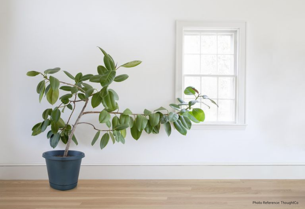 How to check if plant is healthy