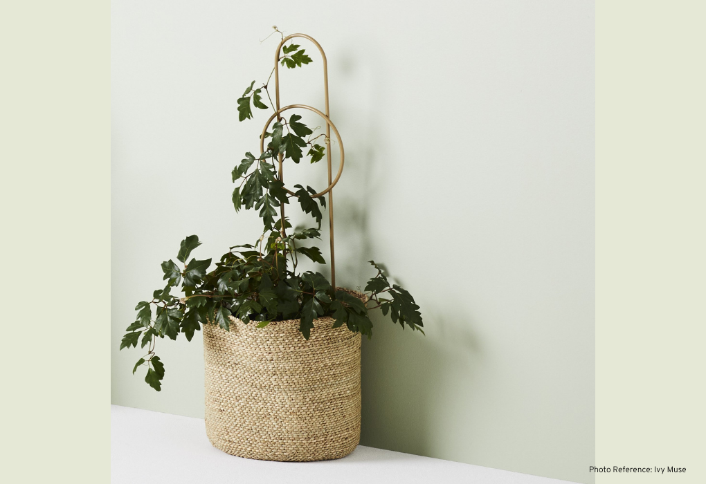 Indoor Plant Stake For Climbing Plants