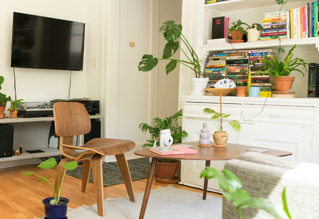 Clean living room with plants