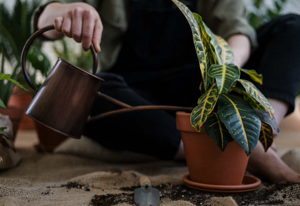 How to Water Plants