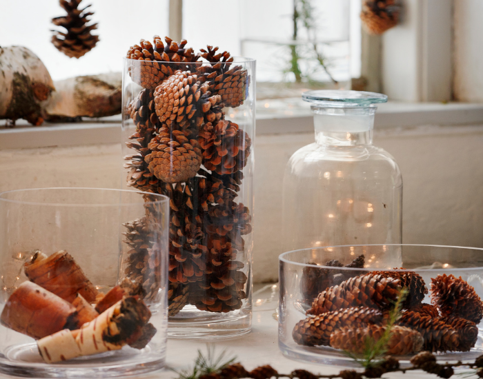 Pine cones for winter decoration