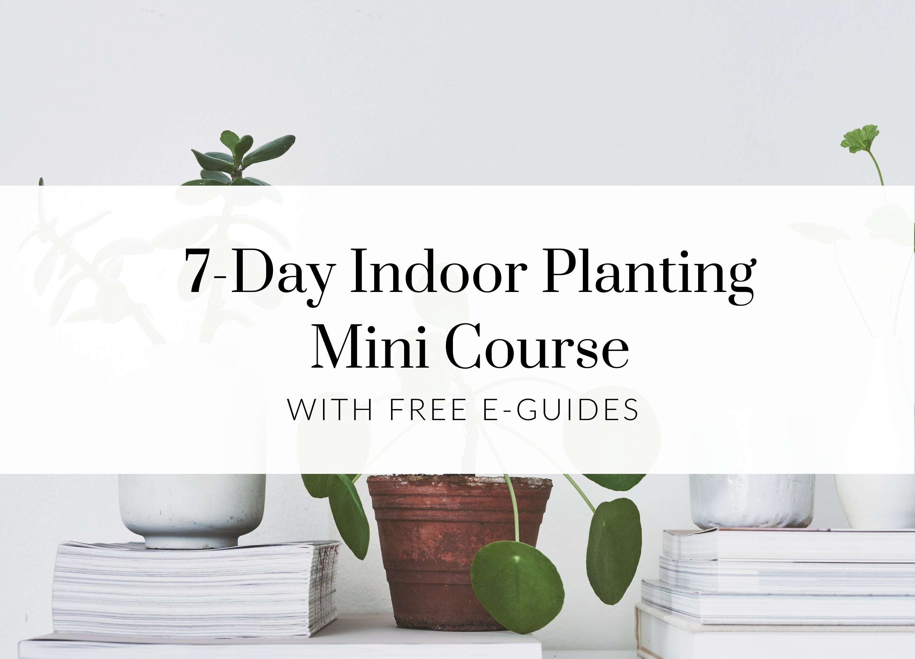 Indoor Planting Guide For Beginners