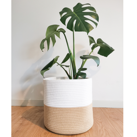 Monstera Deliciosa Indoor Plant in Woven Plant Rope Basket