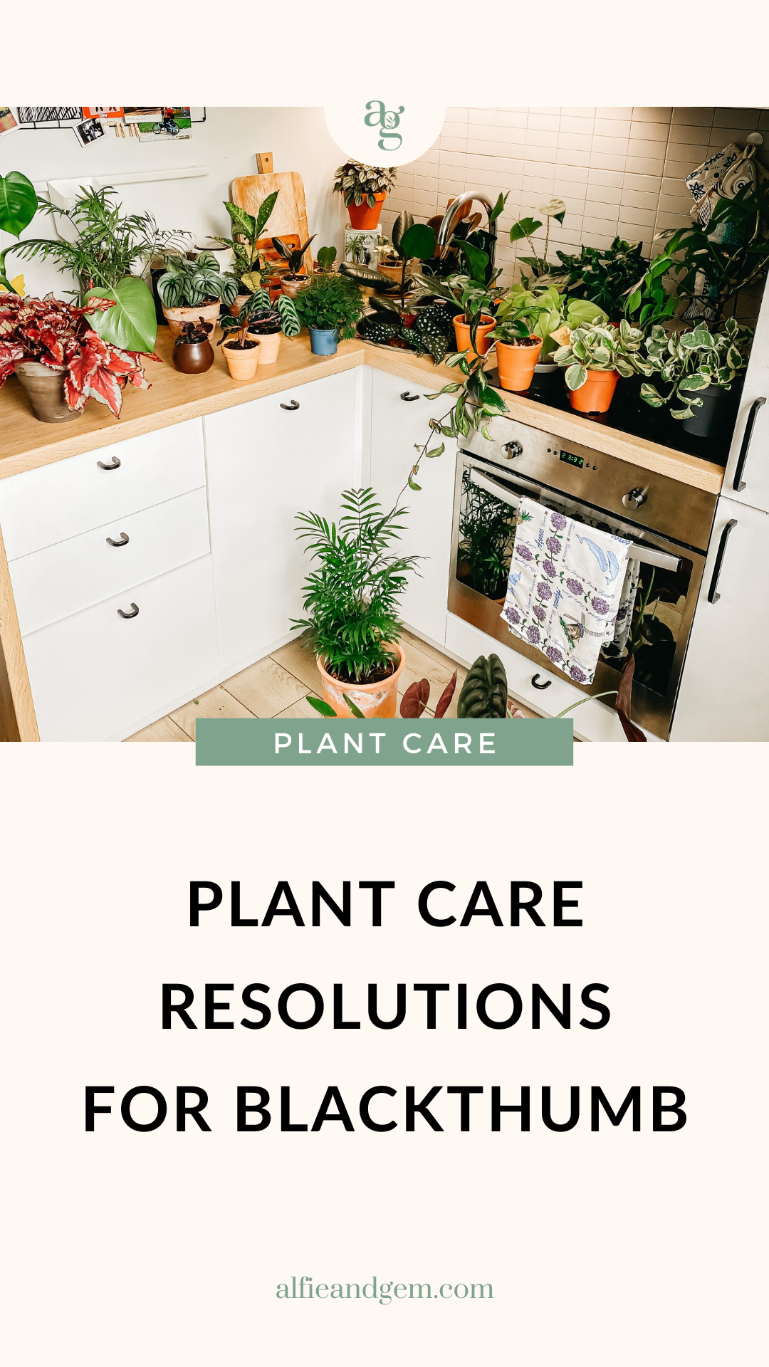 New year plant care resolutions for new plant parents and blackthumb