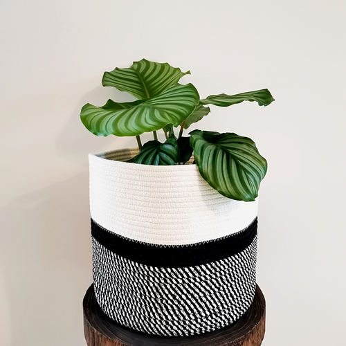 Minimalistic woven cotton basket for plants and for storage.
