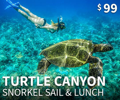 Swim with Turtles Snorkel Tour