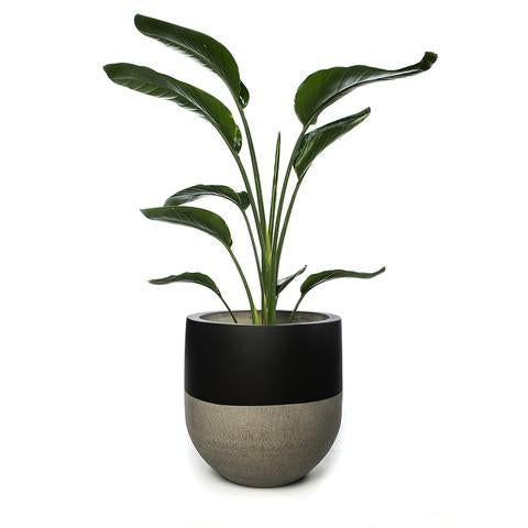 Large Tall Black Pot
