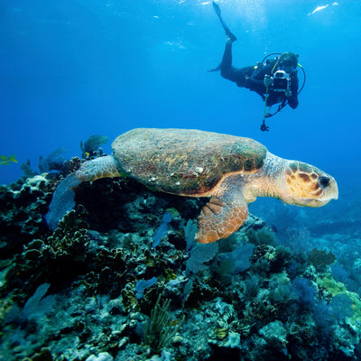 Top Five Best Diving Spots in the United States