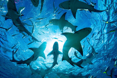 Why Sharks Attack People and How You Can Avoid Becoming a Victim
