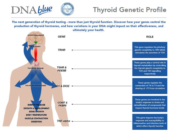 DNA Blue Thyroid Genetics