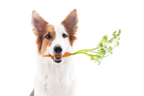 Make Best Dog Food Choices For Your Pet