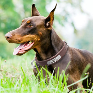 Large Durable Paw-sonalized Leather Dog Collar - Idealpaws