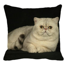 Load image into Gallery viewer, Persian Cat Linen Cushion Cover - Idealpaws