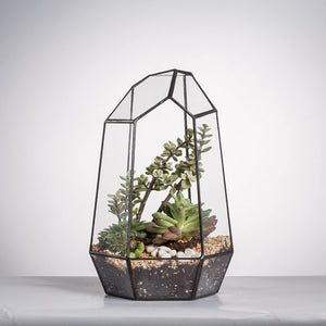 Wardian Case - Terrarium - Home plant - World Class Gift