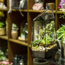 Load image into Gallery viewer, Wardian Case - Terrarium - Home plant - World Class Gift