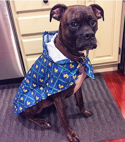 June: Make a Doggy Raincoat - Sewing Workshop