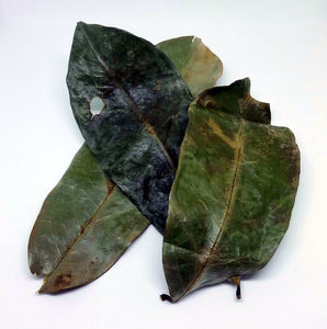 Graviola/Soursop Leaves