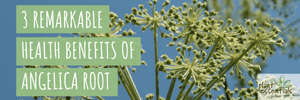 3 Remarkable Health Benefits of Angelica Root