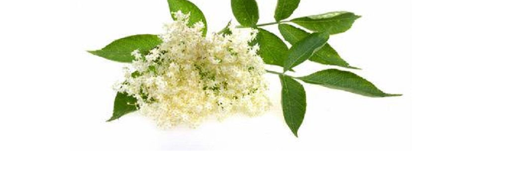 Learn About The Health Benefits And Other Uses For Lemon Myrtle Essential Oil
