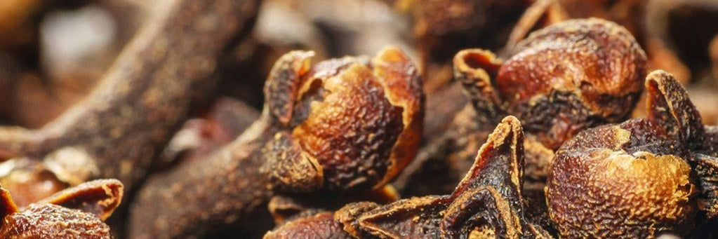 Clove Bud Essential Oil Health Benefits And Uses