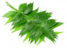 Top Health Benefits Of Neem Herb