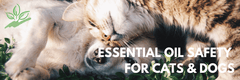 Essential oil Safety for Cats and Dogs (aka Fur Babies)