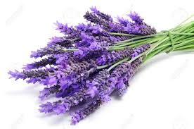Lavender Oil Uses, the Grandmother of all Herbs and Essential Oils