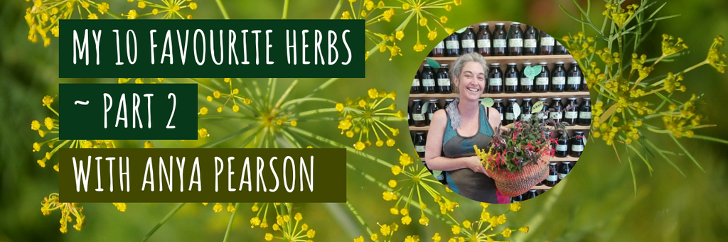 My 10 Favourite Herbs ~ part 2