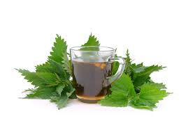 The Many Benefits Of Nettle Tea