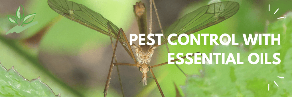 Pest Control with Essential Oils