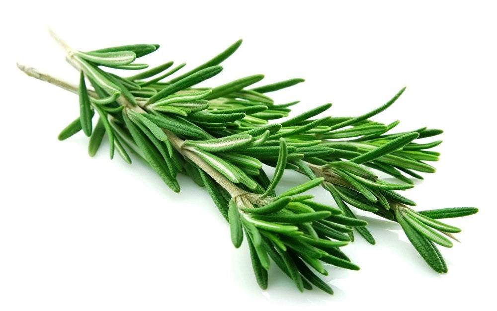 Rosemary, the memory herb & more