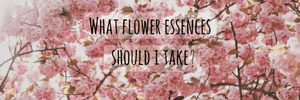 What Flower Essences Should I Take?