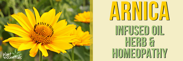 arnica infused oil herb homeopathy