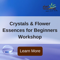 crystals and flower essences workshop