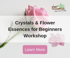 crystals and flower essences for beginners workshop plant essentials