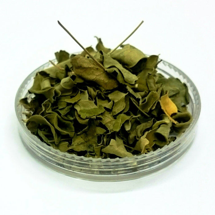 Moringa Leaf, Moringa oleifera, Organically grown