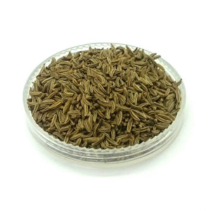 Caraway Seeds ~ Carum carvi
