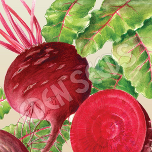 Beetroot, Early Wonder ~ Select Organics Seed Packet